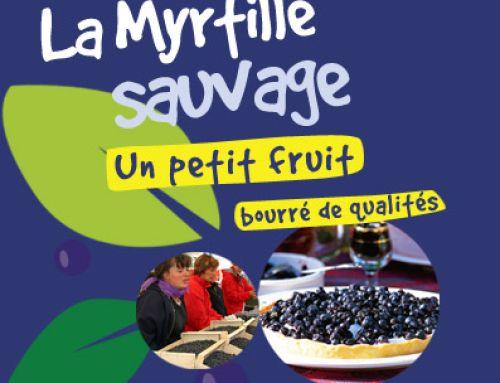 La Myrtille sauvage d'Ardèche